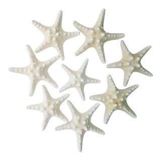 Natural Starfish Specimen, 8 Pieces