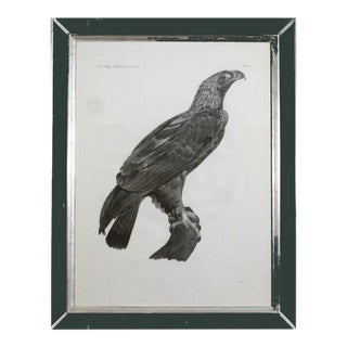 French Stipple Engraving of an Eagle by Savigny
