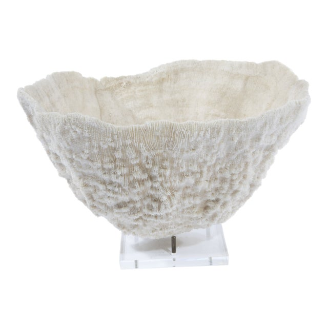 LARGE BOWL-SHAPED CORAL SPECIMEN ON STAND - Image 1 of 11