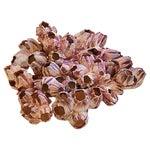 Image of Saltwater Purple/White Barnacle Cluster Specimen