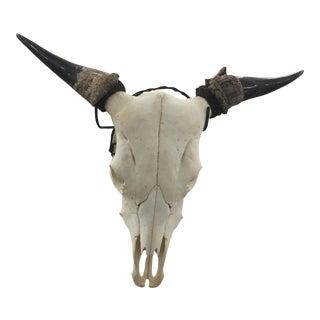 Authentic Cow Skull