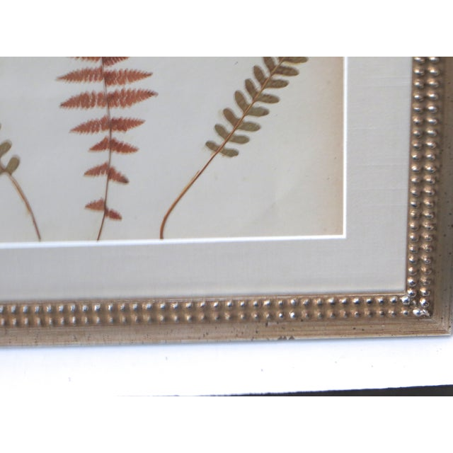 Image of 1880s American Fern Specimen