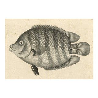 Vintage Big Fish Archival Print