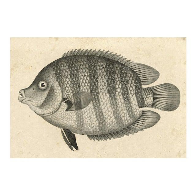 Vintage big fish archival print chairish for Big fish printing