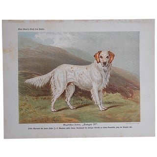"Antique Dog Lithograph ""English Setter"""