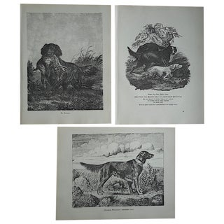 Antique Hunting Dog Engravings - Set of 3