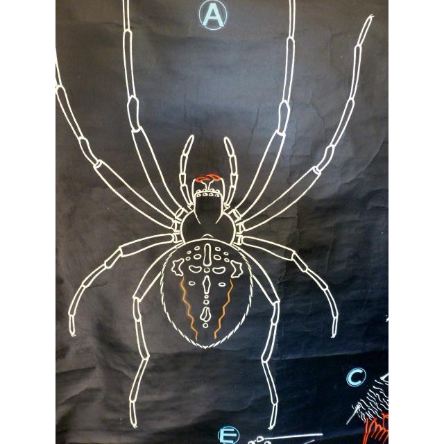 Image of French Vintage Chalk Plate Garden Spider