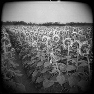 """""""Disgrace"""" Black & White Photograph"""