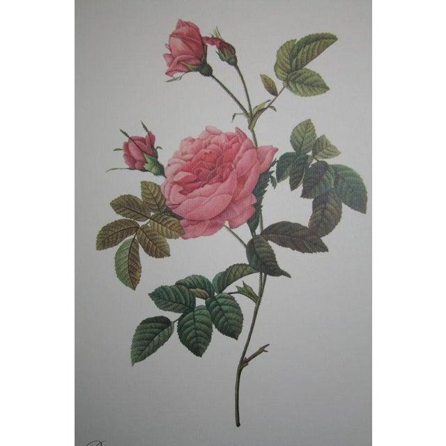 Original Pierre Redouté Botanical Prints - S/3 - Image 2 of 8