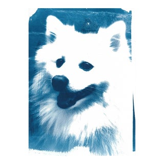 Limited Edition: Japanese Spitz Dog, Cyanotype on Watercolor Paper
