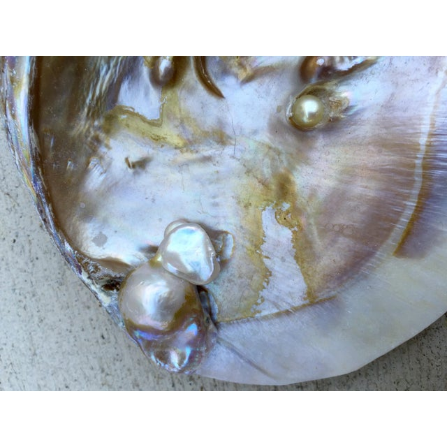 Natural Shell Tray With Baroque Pearl - Image 9 of 11