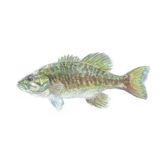 Smallmouth Bass - Print of an Original Watercolor