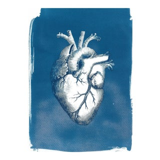 Heart Anatomy Illustration Cyanotype Print