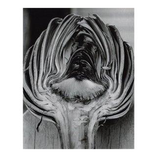 Cynara Scolymus by Horst P. Horst, 1945