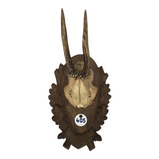 Deer Horns Wall Trophy