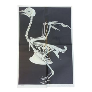 Vintage Anatomy Science Poster - Bird Skeleton