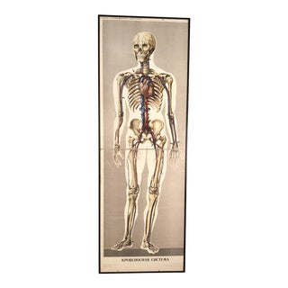 1970s Russian Anatomical Diagram