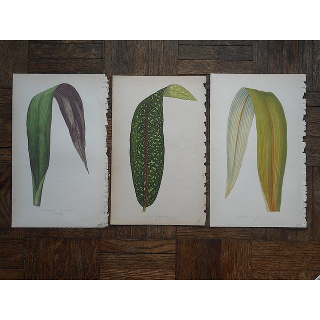 3 Antique Ornamental Leaves Lithographs - Image 2 of 5