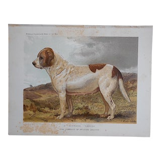 """Antique Dog Lithograph """"St. Bernard"""""""