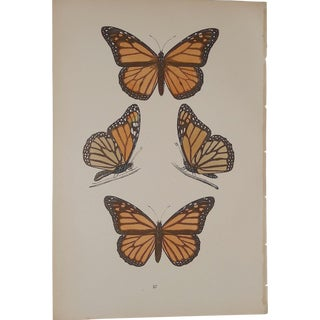 19th Century Antique Butterfly Lithograph