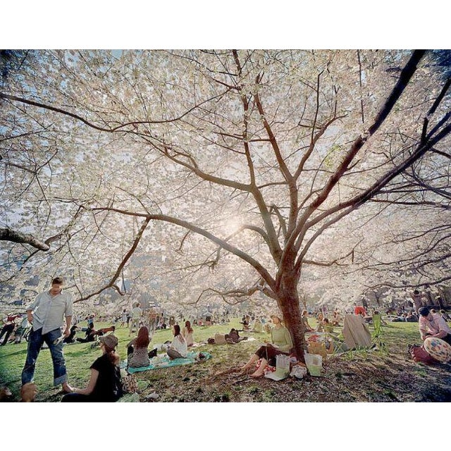Untitled from Local Stories series - Central Park Blossoms, color photography print by Jerry Spagnoli - Image 2 of 3