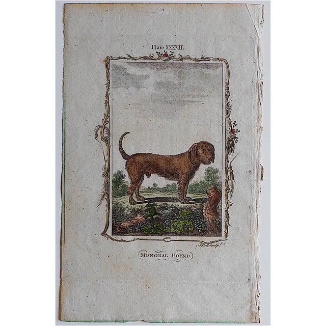 Image of Antique English Dog Engraving