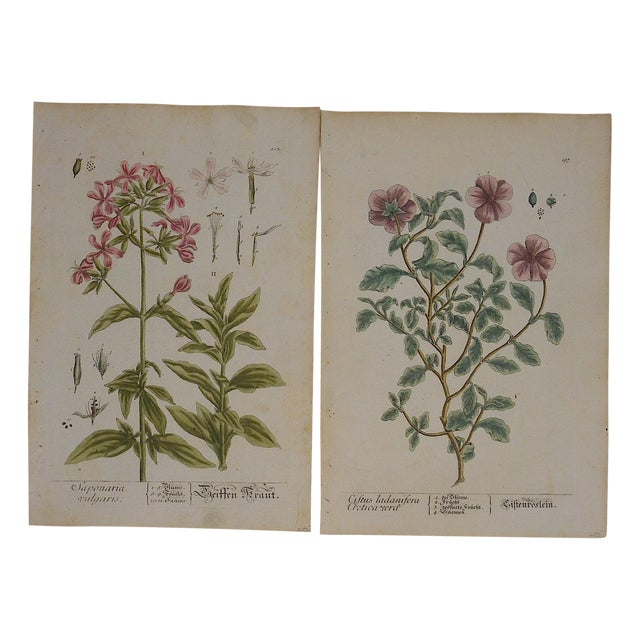 18th C. Botanical Engravings Folio Size- Set of 2 - Image 1 of 5