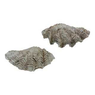 Vintage Half Clam Sea Shells - a Pair
