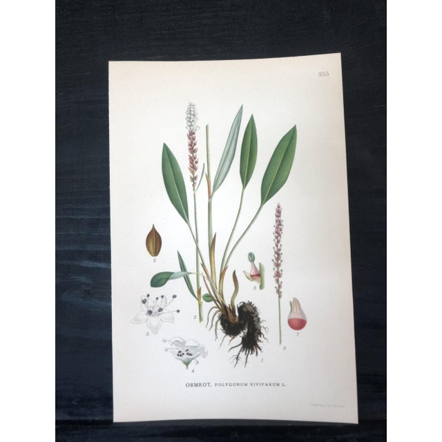 Swedish Floral Prints - Set of 4 - Image 4 of 6