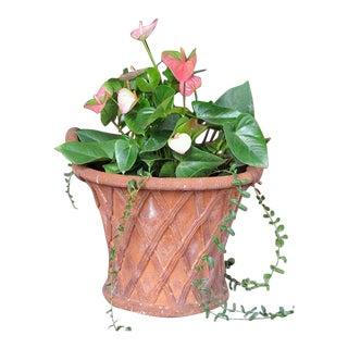 A Large-Scaled English Terracotta Basket Weave Garden Urn