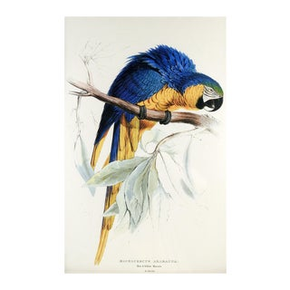 Blue & Yellow Macaw Print