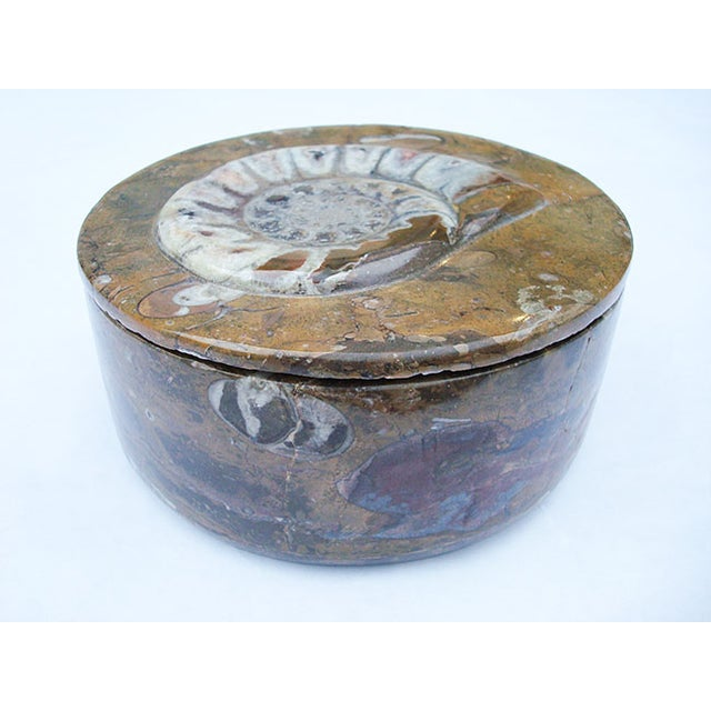Ammonite and Orthocerus Carved Box - Image 2 of 5