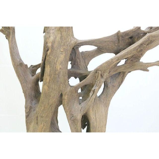 Drift Wood Sculpture - Image 5 of 9