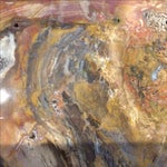 Image of Petrified Wood Top Side Table