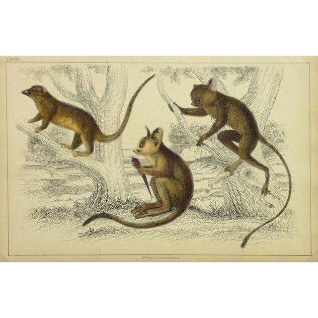 Vintage Monkey Print Engraving, 1853 - Image 1 of 4