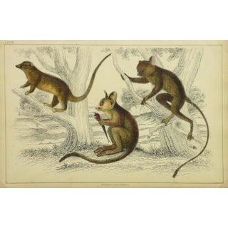 Vintage Monkey Print Engraving, 1853