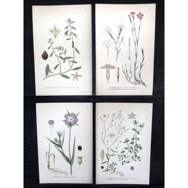 1922 Swedish Floral Prints - Set of 4 - Image 2 of 6