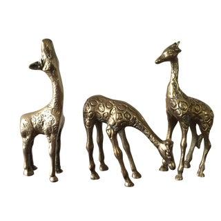 Brass Giraffes - Set of 3