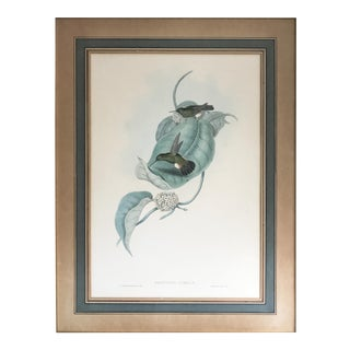 Antique Gould Hummingbird Lithograph