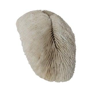 Rare Antique Coral