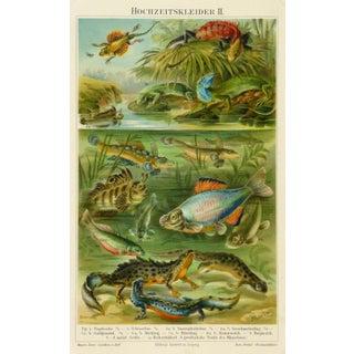 Antique Fish Print - Aquatic Life, 1885