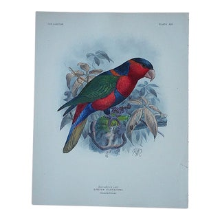 Antique Hand Colored Parrot Lithograph Salvadori's Lori