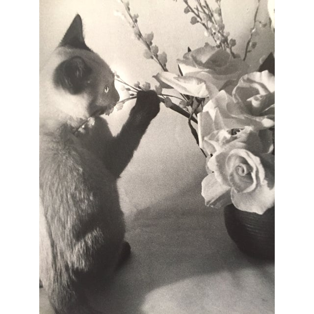 Siamese Cat and Roses 1956 Exibited Photograph - Image 3 of 4