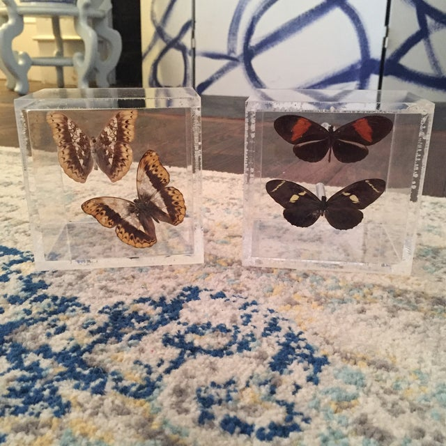 Image of Lucite Cube Box Encased Butterfly Specimens Oddities Curiousities- a Pair