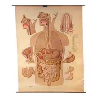 Carolina Human Anatomy Series: The Digestive System