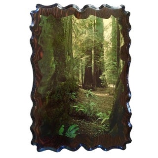 Vintage Redwoods Photography Wall Art