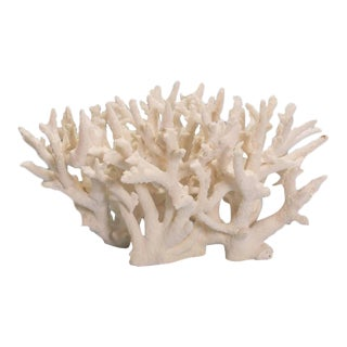 Dramatic and Authentic Staghorn Coral Sculpture