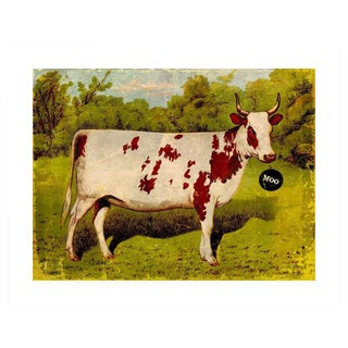 "Archival ""Moo"" Antique Print"