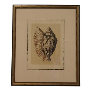 Framed Shell Art Print