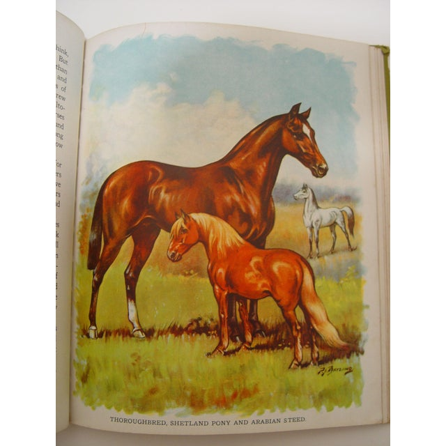 1928 Animal Friends Story Book - Image 10 of 10